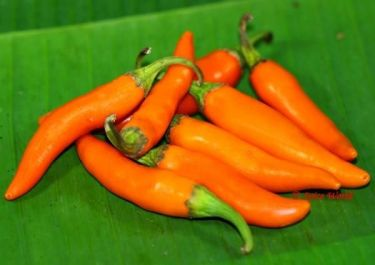 Thai orange chili